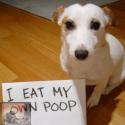 Coprofagie: het eten van ontlasting door de hond
