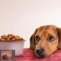 Overgewicht bij honden en katten: een gewichtig probleem