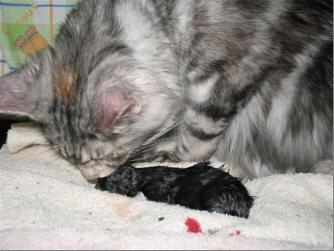 hoe vaak eten kittens