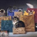 Verhuizen met uw kat