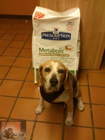 metabolic_Dinya