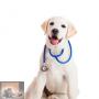 Infectieziekten bij de hond en kat