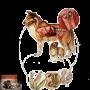 Diarree bij de hond