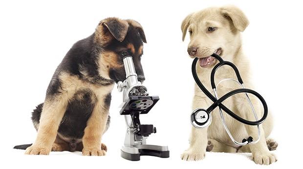 medicatie tegen diarree hond