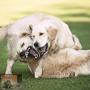Spel of gevecht bij honden