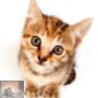 Oproep Vlaamse Overheid omtrent castratie katten